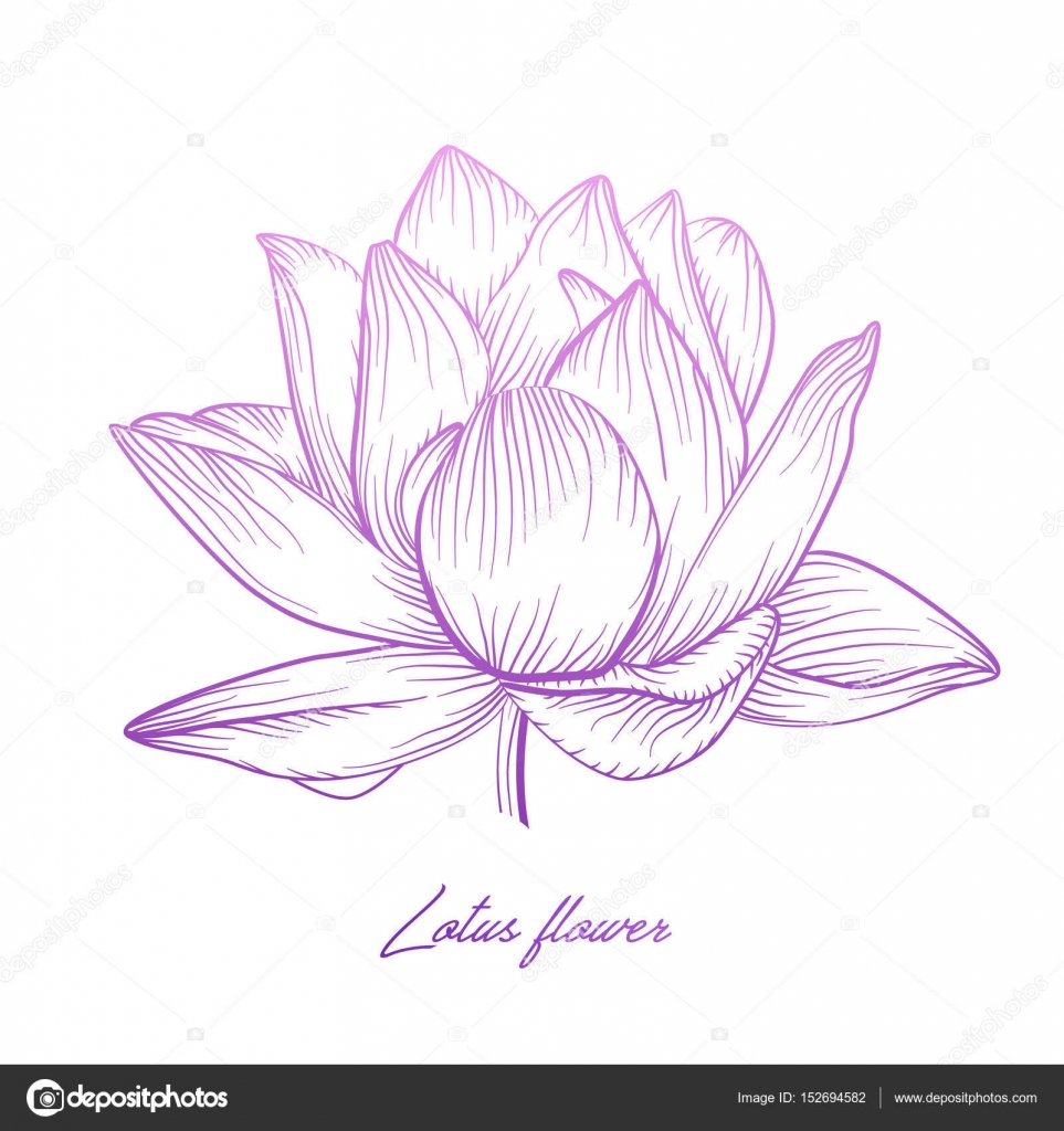 Tatouage n nuphar galerie tatouage - Fleur de lotus symbole ...