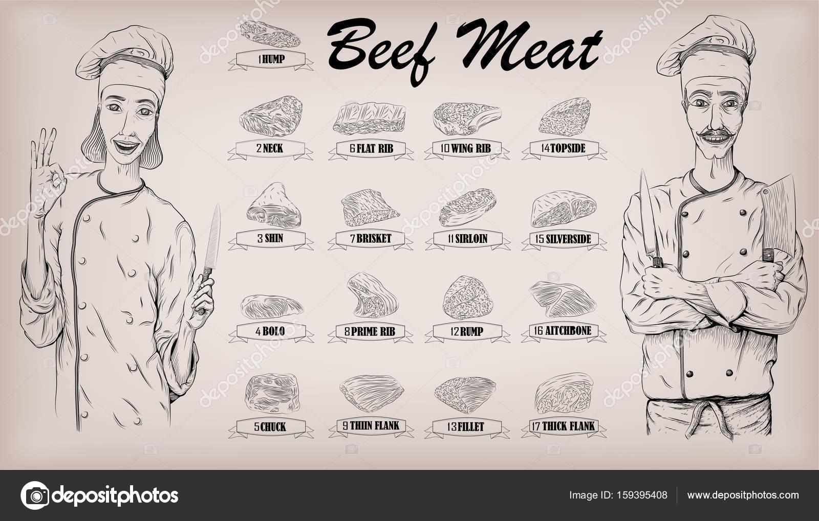 Carne en canal carne corta piezas Vaca chuletas información gráfica ...