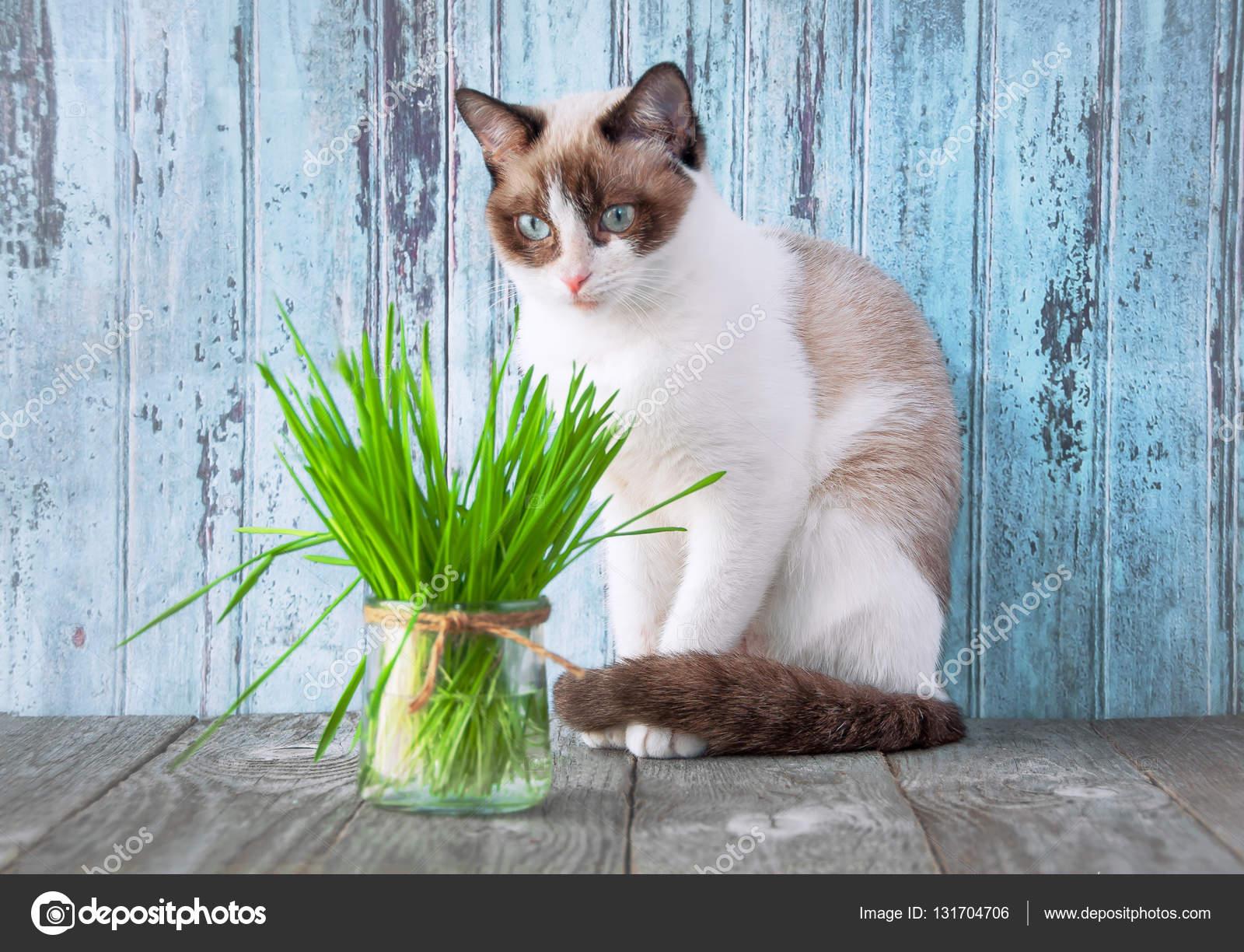 katten gezondheid