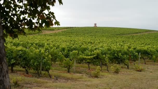 Bordeaux Vineyard Medoc