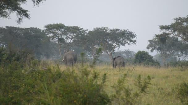 Divokých afrických slonů
