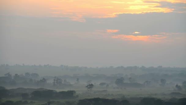 savany v ranní mlze