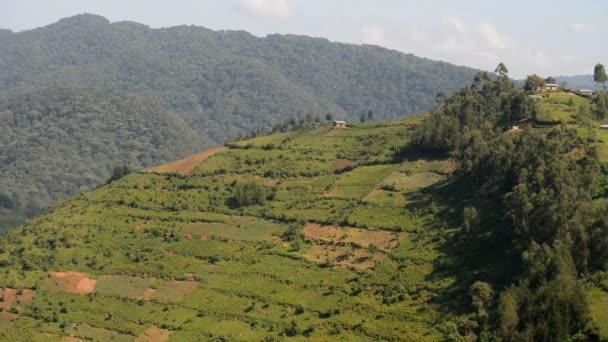 Agricultural Landscape in the Uganda