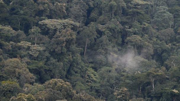 Letecký pohled na les v Ugandě