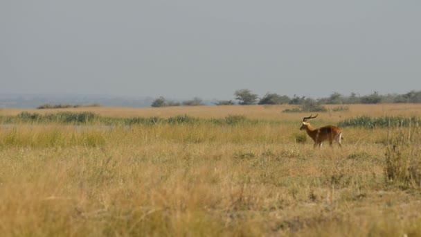 Murchison vízesés Nemzeti Park Uganda Judit