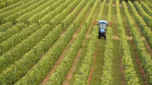 traktor na práci během sklizně na vinici
