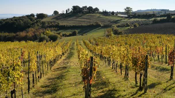 Vinic Montepulciano u města v Itálii