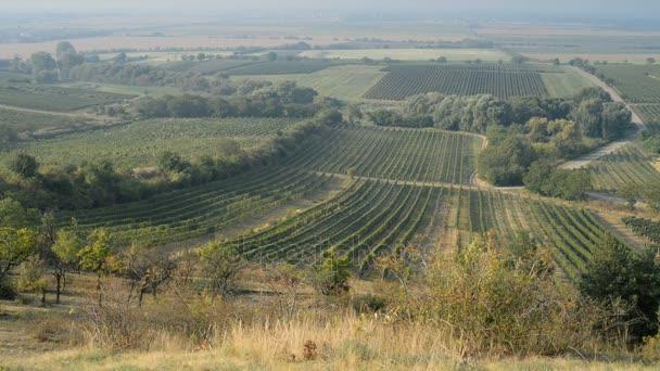 Vinice v blízkosti Velké Bílovice v České republice