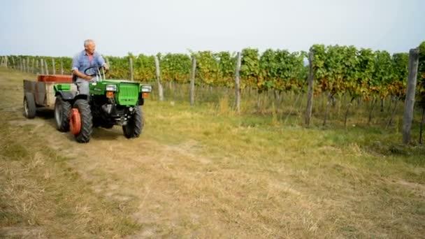 Muž jede na traktor na vinice