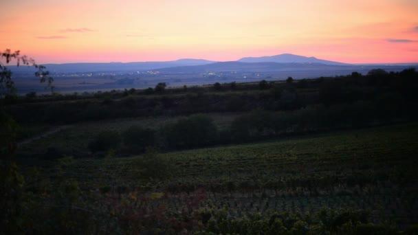 Západ slunce nad vinicí, Morava, Česká republika