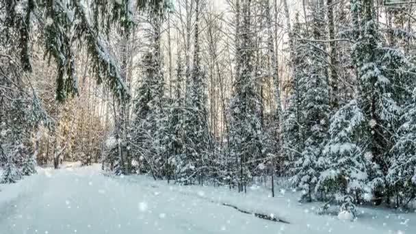 Cinemagraph, 4k, esik a hó, a téli erdő, hurok