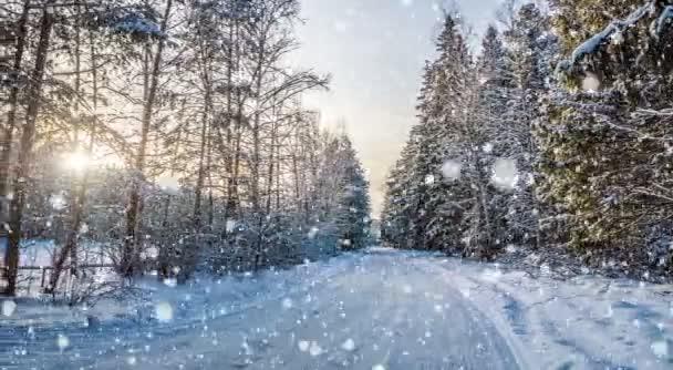 Padající sníh v zimním lese, Cinemagraph, smyčce, 4k