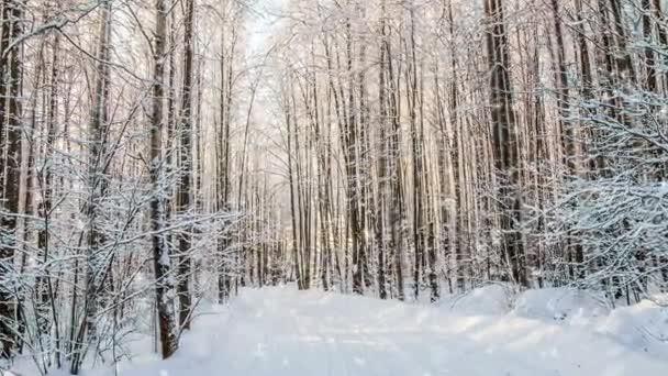 Cinemagraph, 1080p, padající sníh v zimním lese, smyčka