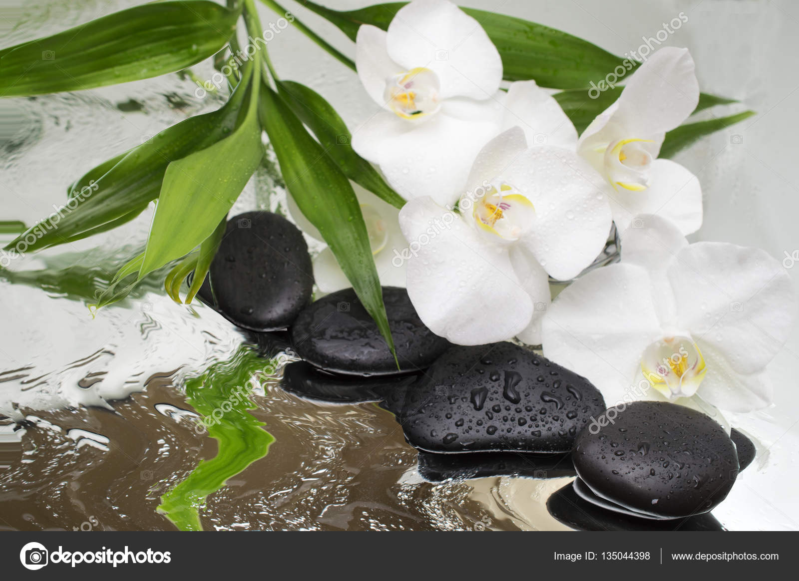 Fotos Flores Orquideas Negras Spa De Fondo Orquideas Negras