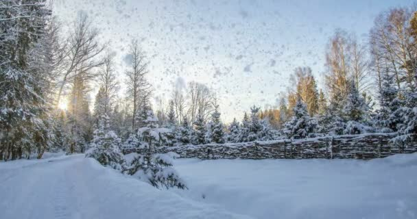 CINEMAGRAPH, 4k, falling snow in the winter forest, loop