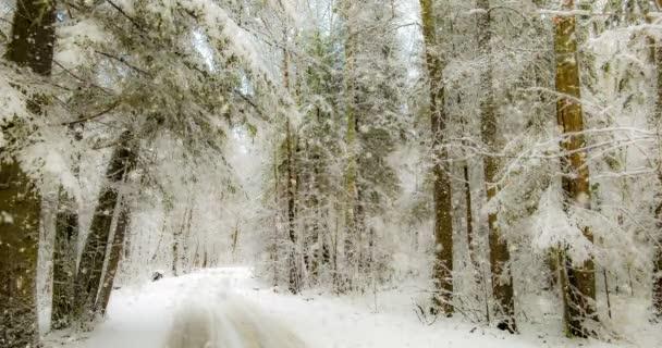 Cinemagraph, 4k, padající sníh v zimním lese, smyčka