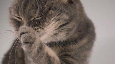 super gros lèvres de la chatte