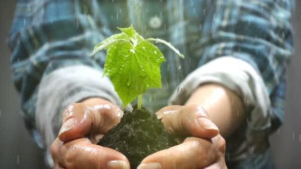 Maroknyi talaj, fiatal növény. Koncepció és a jelképe a növekedés, a care, a fenntarthatóság, a föld, az ökológia és a zöld környezet védelme. női kezek.