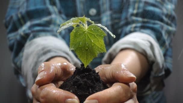 Hrst půdy s pěstování mladých rostlin. Koncept a symbol růstu, péče, udržitelný rozvoj, ochrana životního prostředí země, ekologie a zelené. ženské ruce.