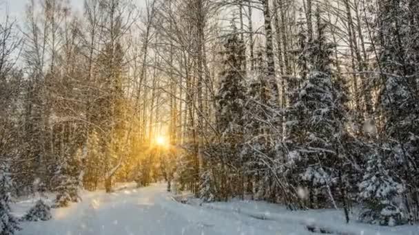 Sanfter Schneefall im winterlich verschneiten Wald, abendliche Winterlandschaft, Fichtenzweig im Schnee