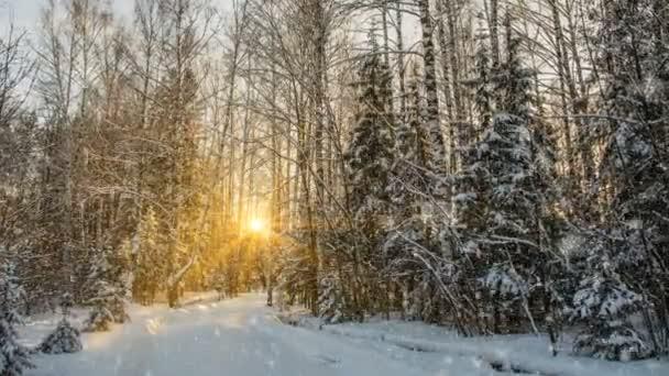 Puha havazás, havas téli erdőben, este a téli táj, fenyő ága a hóban