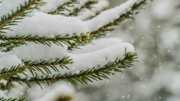 Schneefall im Wald, wunderschöne Winterlandschaft, Videoschleife