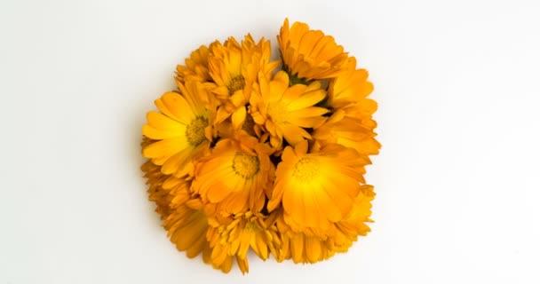 Časový interval kvetení květin .