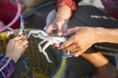fishermen holding spider crab at daytime