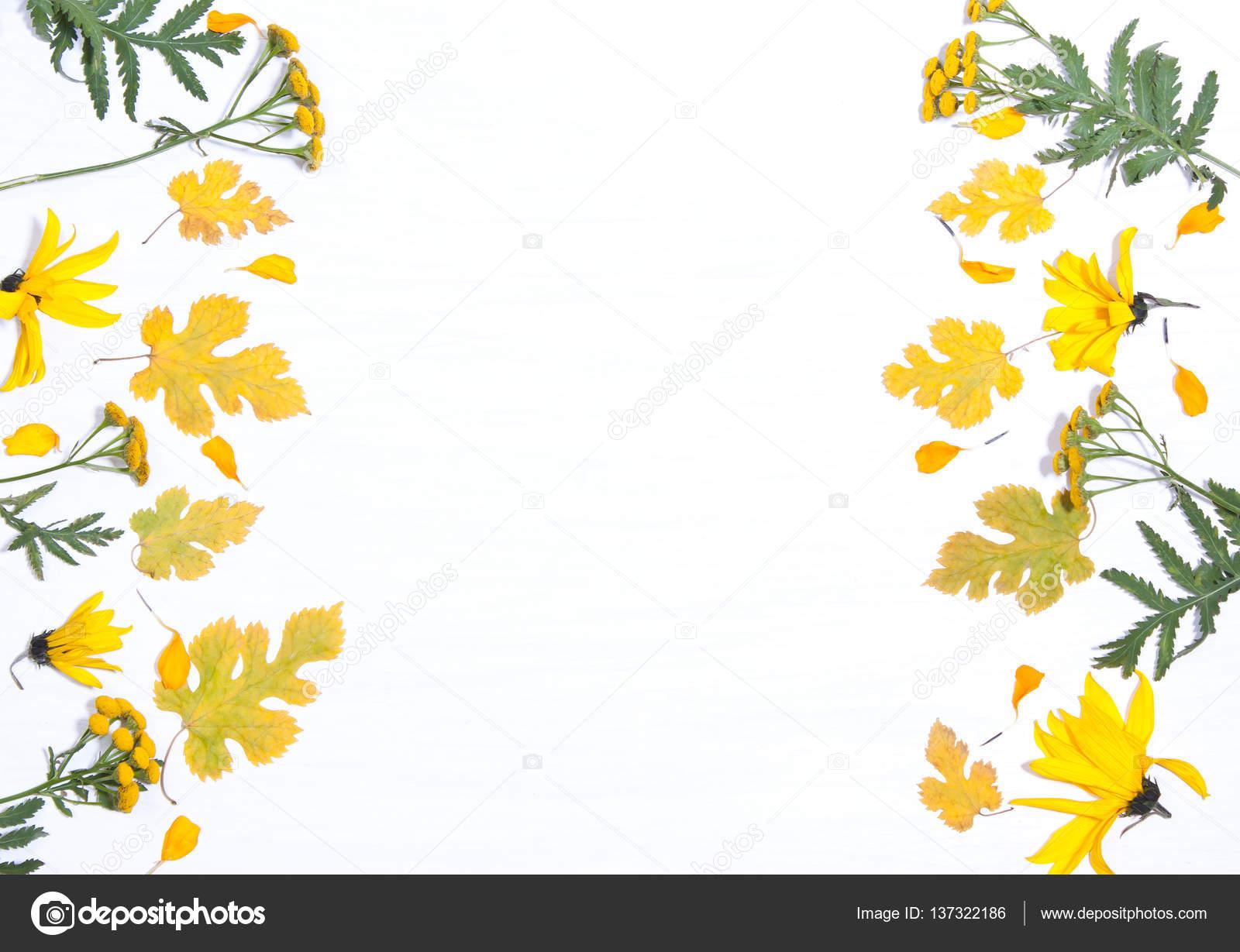Rahmen der gelben Blüten und Blätter — Stockfoto © Alexmia #137322186