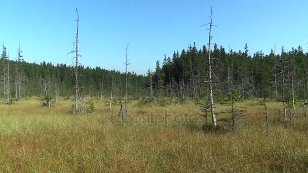 Rašeliniště, malé mechové jezírko na Rejvízu Npr, umírání lesů