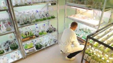 Člověk vědeckému výzkumu řasy skladování, okysličení a laboratorní