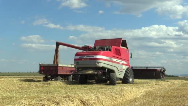 Moderne Mähdrescher geerntet Weizen, Transport zum Lager