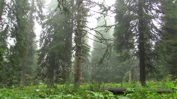 Dead tree are caused by acid rains, sulfur oxides, nitrogen and ozone, emissions