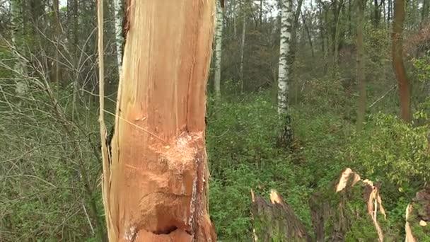 white willow bark svenska