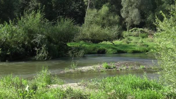Vnitrozemí River Delta řeky v Litovelske Pomoraví lužní les, nížiny,