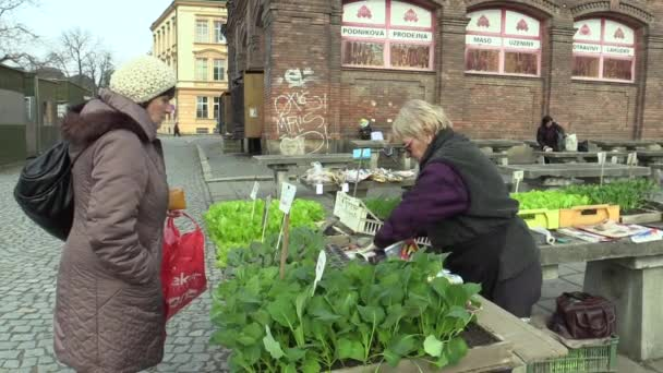 Olomouc, Česká republika, 30 března 2018: prodej trh hlávkový salát, zelený salát, kedlubny a pažitka v transplantaci sazenice skleník, tradice v statutární město Olomouc, zahradnictví, bio kvalita