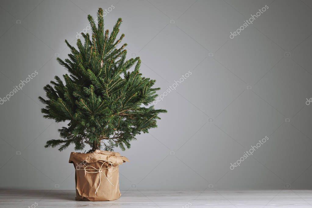 Lush Christmas tree on gray background