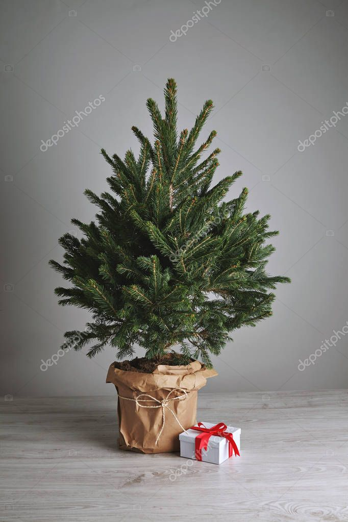 Pretty Christmas tree with a present