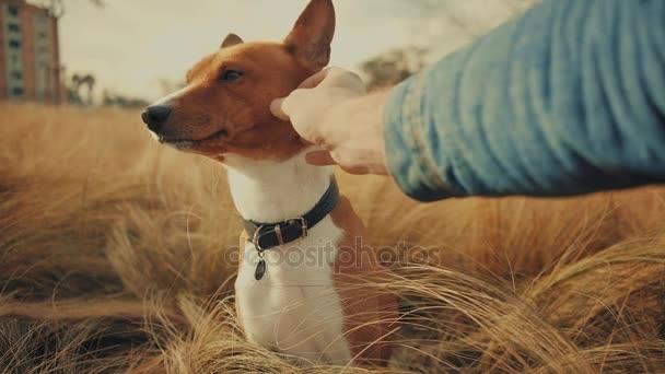 Přátelství psa a jeho majitele