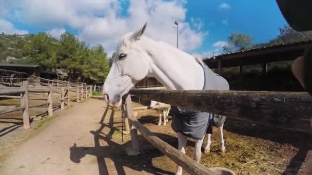 Hostující koně farma set