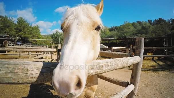 Látogató ló farm beállítása