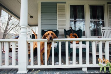 Pet dog waits for owner on porch