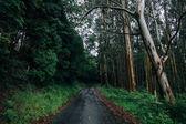 Prázdné úzké silnici v deštivé lese