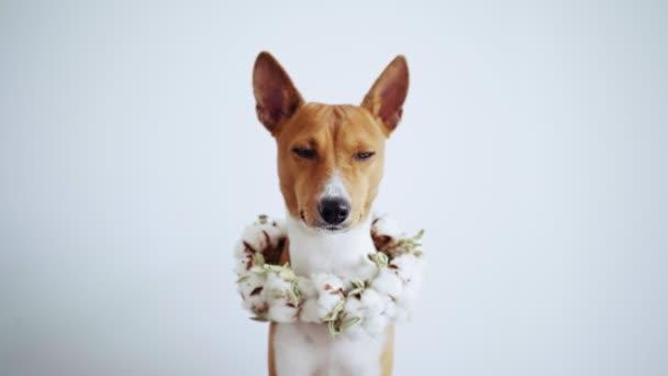 Hezký hnědý pes v květinový věnec se dívá na kameru