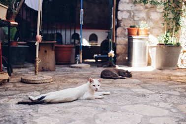 Stray cats lay on street in Dubrovnik