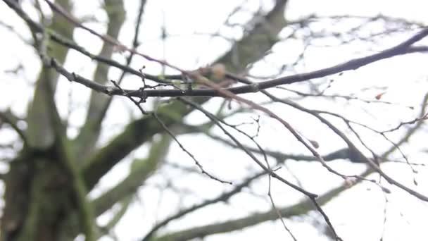 Nahý větve stromů
