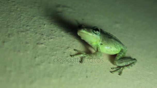 Lustiger grüner Frosch sitzt an der Wand