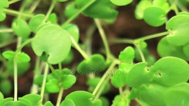 Csírázás növények zöld természet Backround