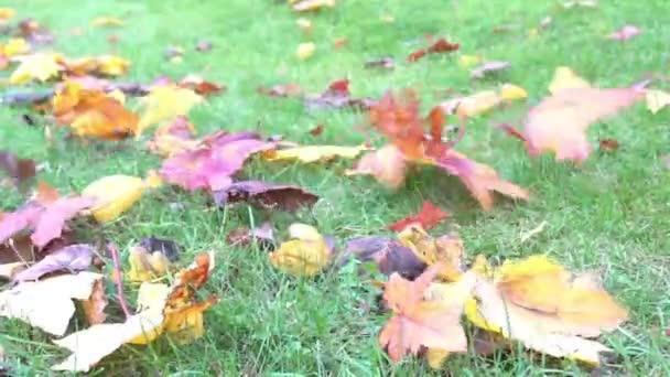 Žluté podzimní listy na zelené trávě v parku foukání větru, zemi listí podzimní sluneční světlo, barvu pozadí v říjnu zpomalené