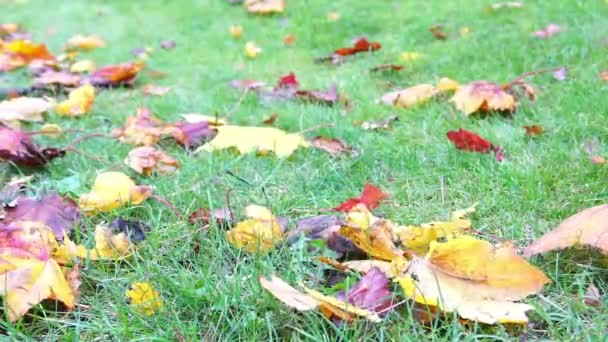 autumn yellow leaves on green grass in park blowing on wind, autumnal sunlight foliage ground, color background in october slow motion